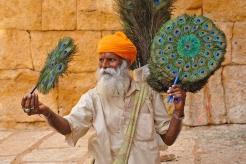 India Pauwenveren