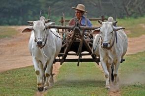 Myanmar oxwagen